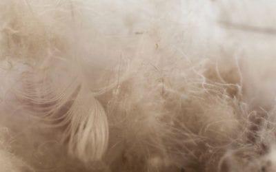 . Manteau en duvet : quoi faire lorsque la fibre s'échappe de votre parka.