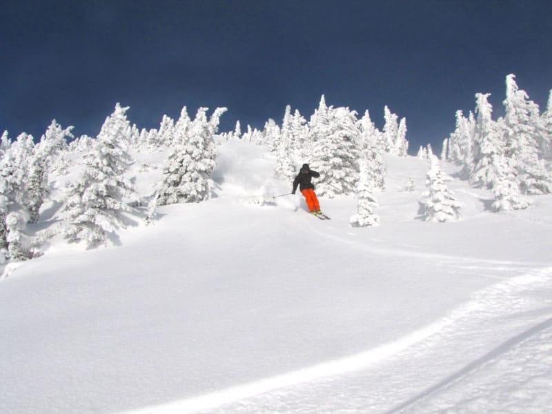 Picking-alpine-trees-revolstock