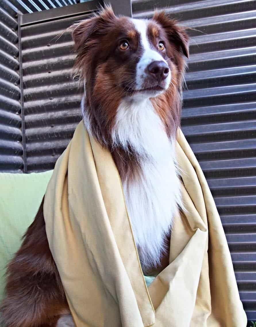 chien-packtowl