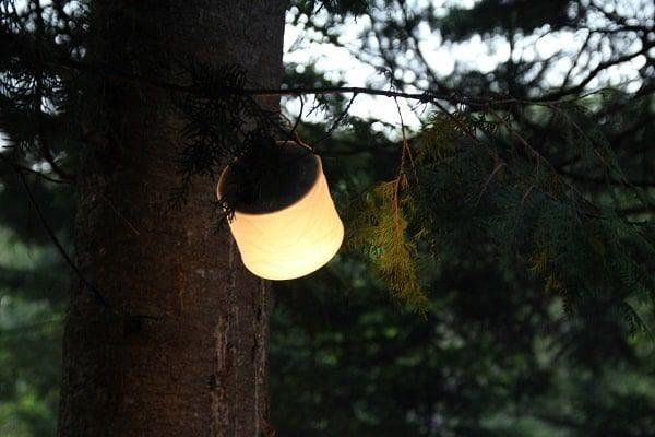 mpowerd-light-tree