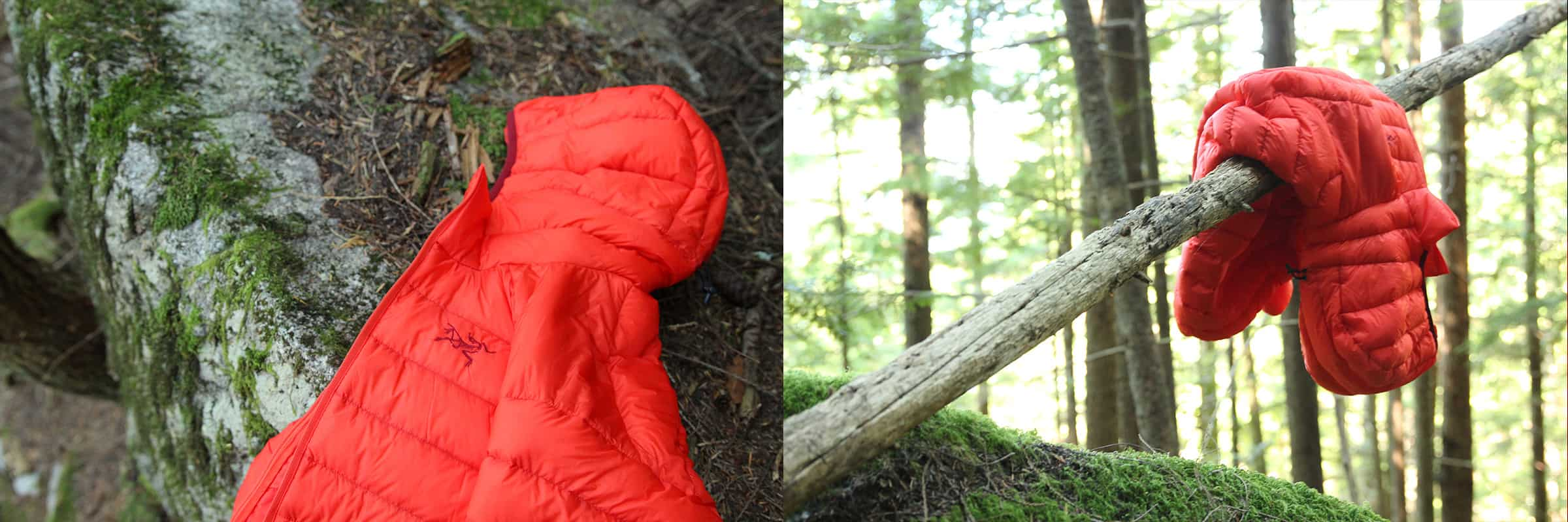 cerium lt hoody in the forest