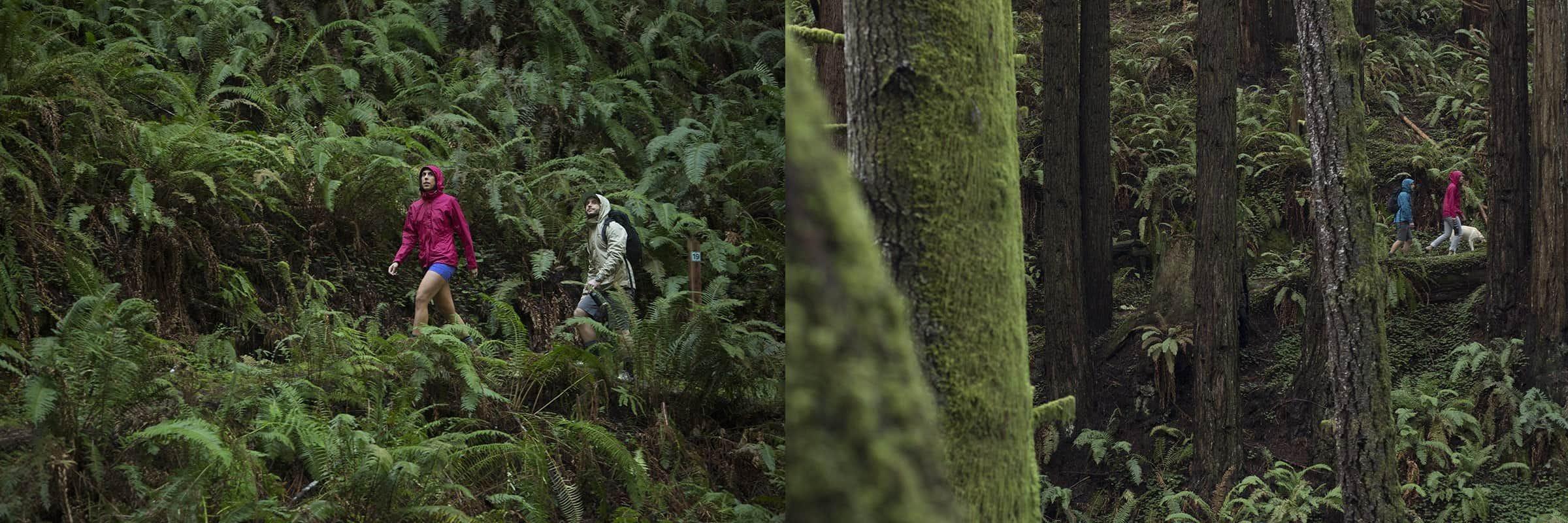 wet rainforest and ferns