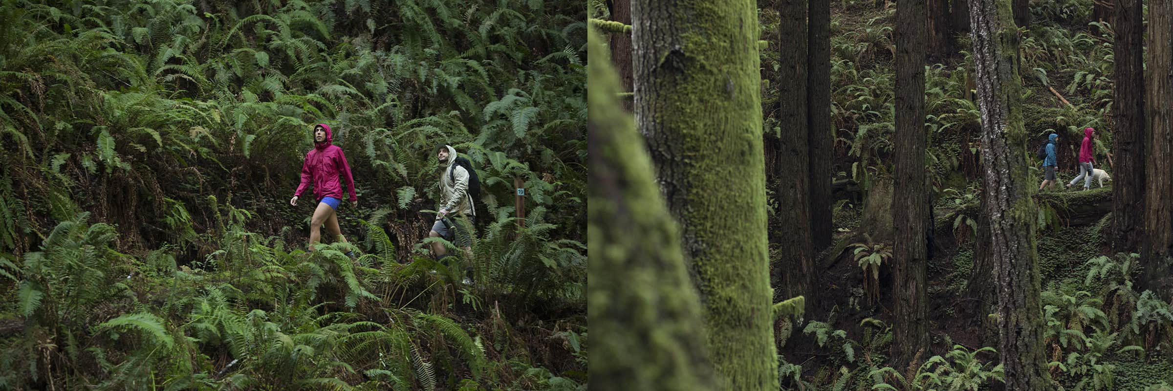 exploring rainforest