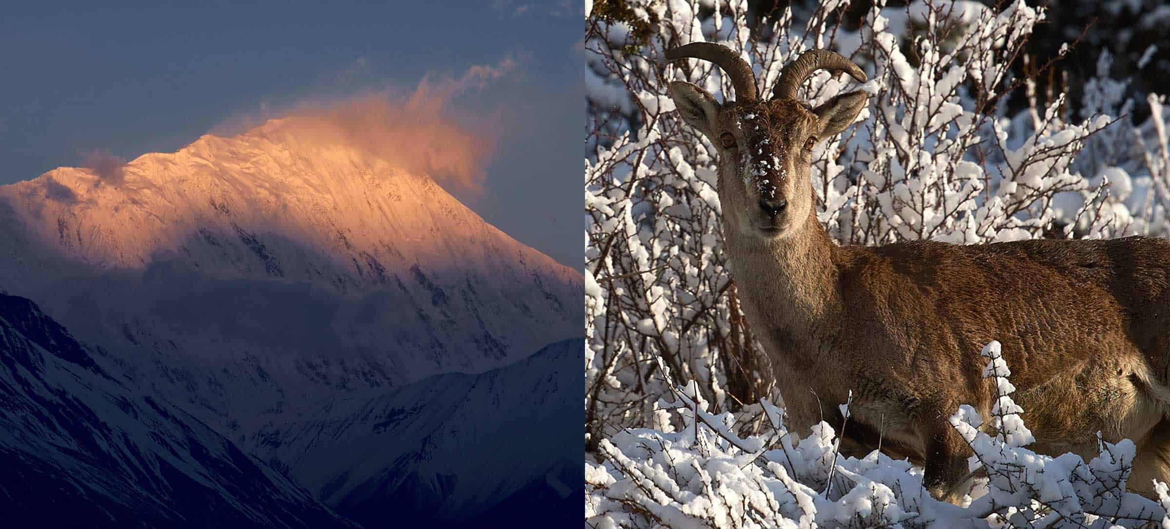 nepal mountains and wildlife