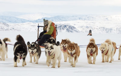 Hiking & Trekking, Winter. Dog Sledding in Nunavut.
