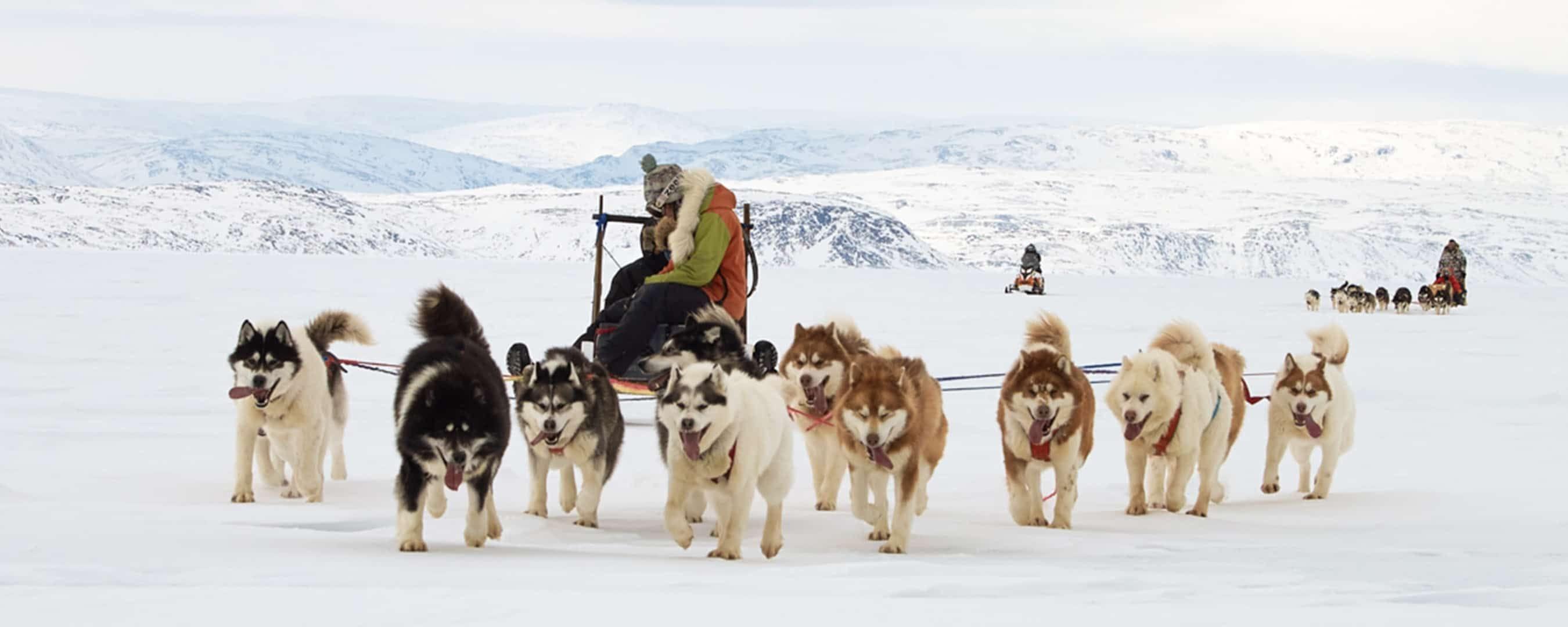 Hiking & Trekking, Winter. Dog Sledding in Nunavut