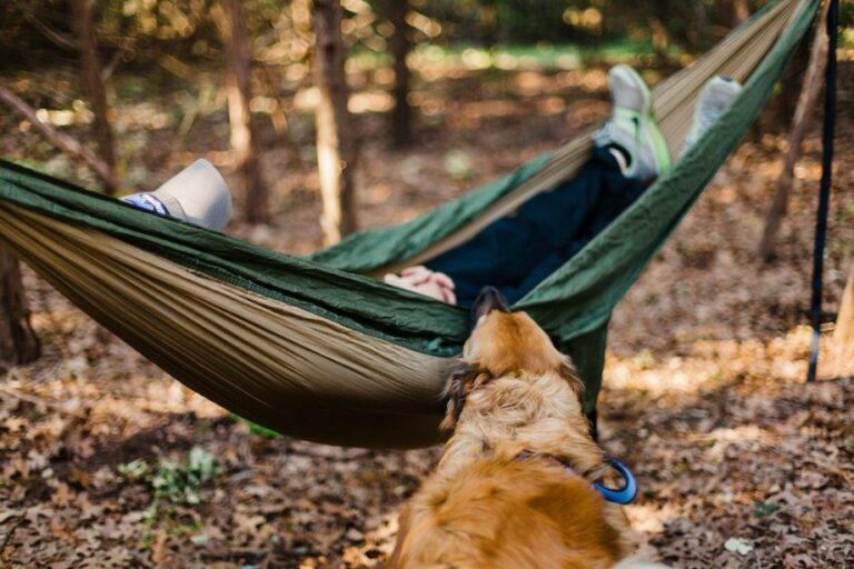 Dog searching his owner in a hammock in the forest